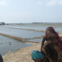 Forcible received saline water in middle of night by break down the gate sluice for shrimp cultivation -1